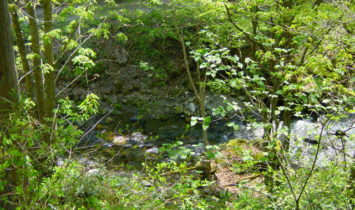 iewp002 355x210 - 馬瀬川渓流釣り 甥っ子の初アマゴ釣り