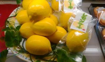 レモンケーキ サンプル